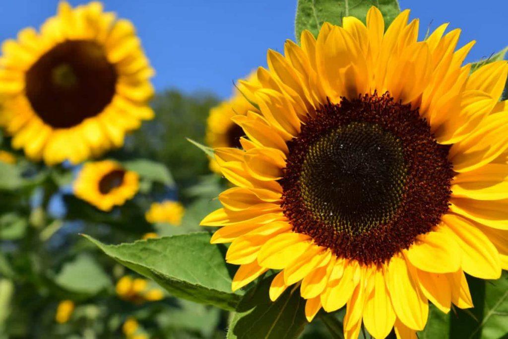 la voyance gratuite pour trouver son soleil